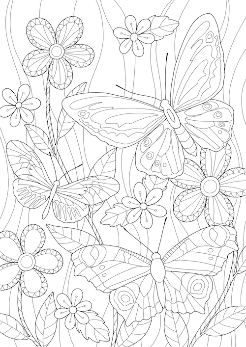 Butterfly Colouring In Activity Sheet  image